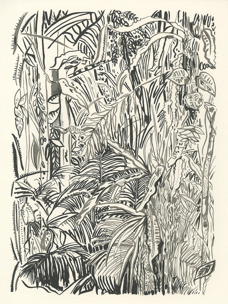 Image of Surveying the Daintree screen print