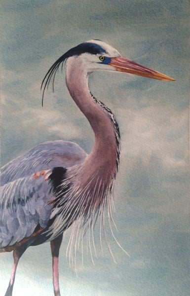 Image of Blue Heron