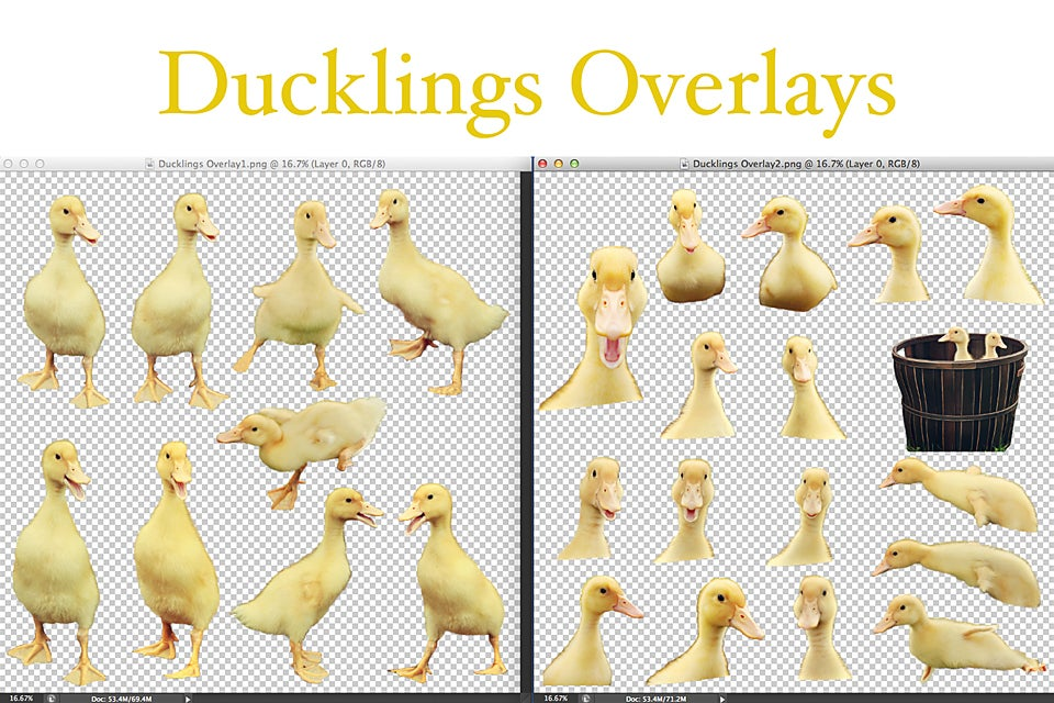 Image of Ducklings Overlays