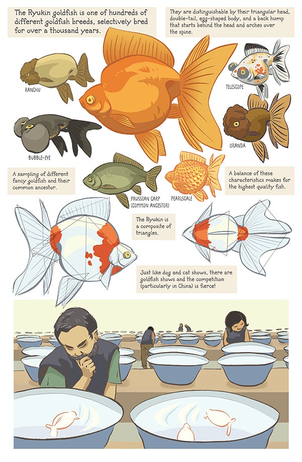 Image of Ryukin Goldfish poster