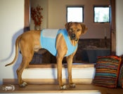 Image of K9FITvest® Starter Kit - FREE Guided Program!!!