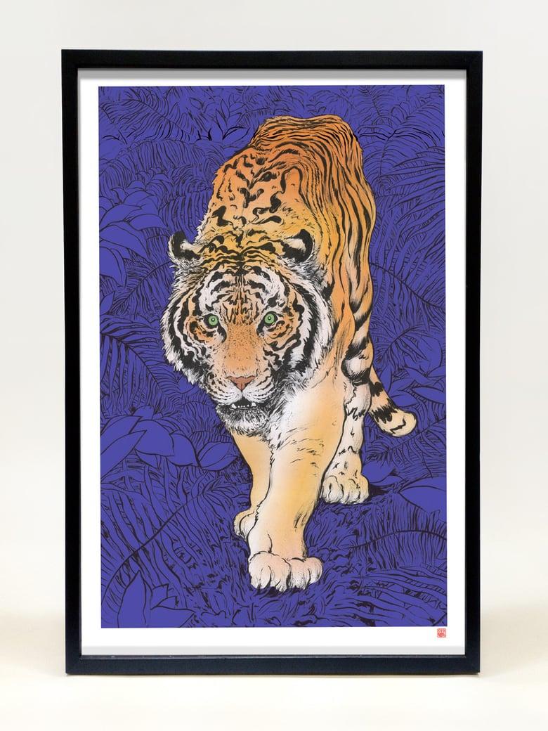 Image of Panthera tigris