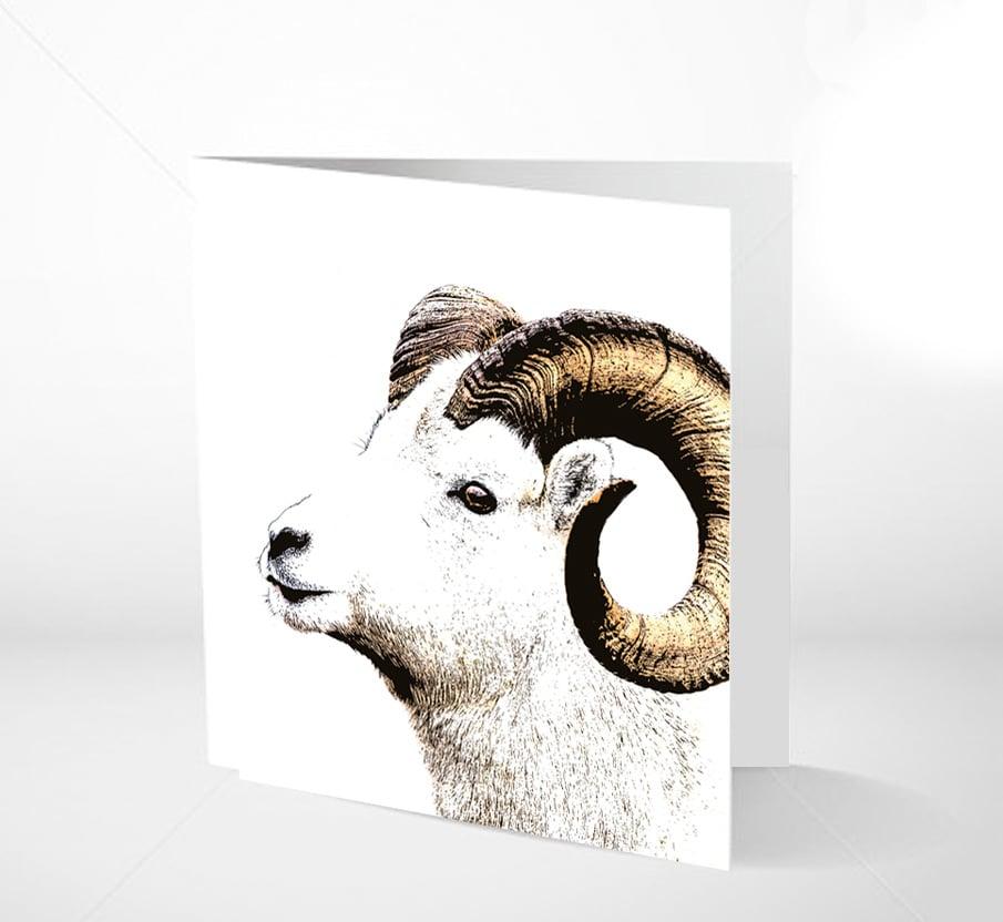 Image of GRATULASJONSKORT - BIG HORN SHEEP 14 x 14
