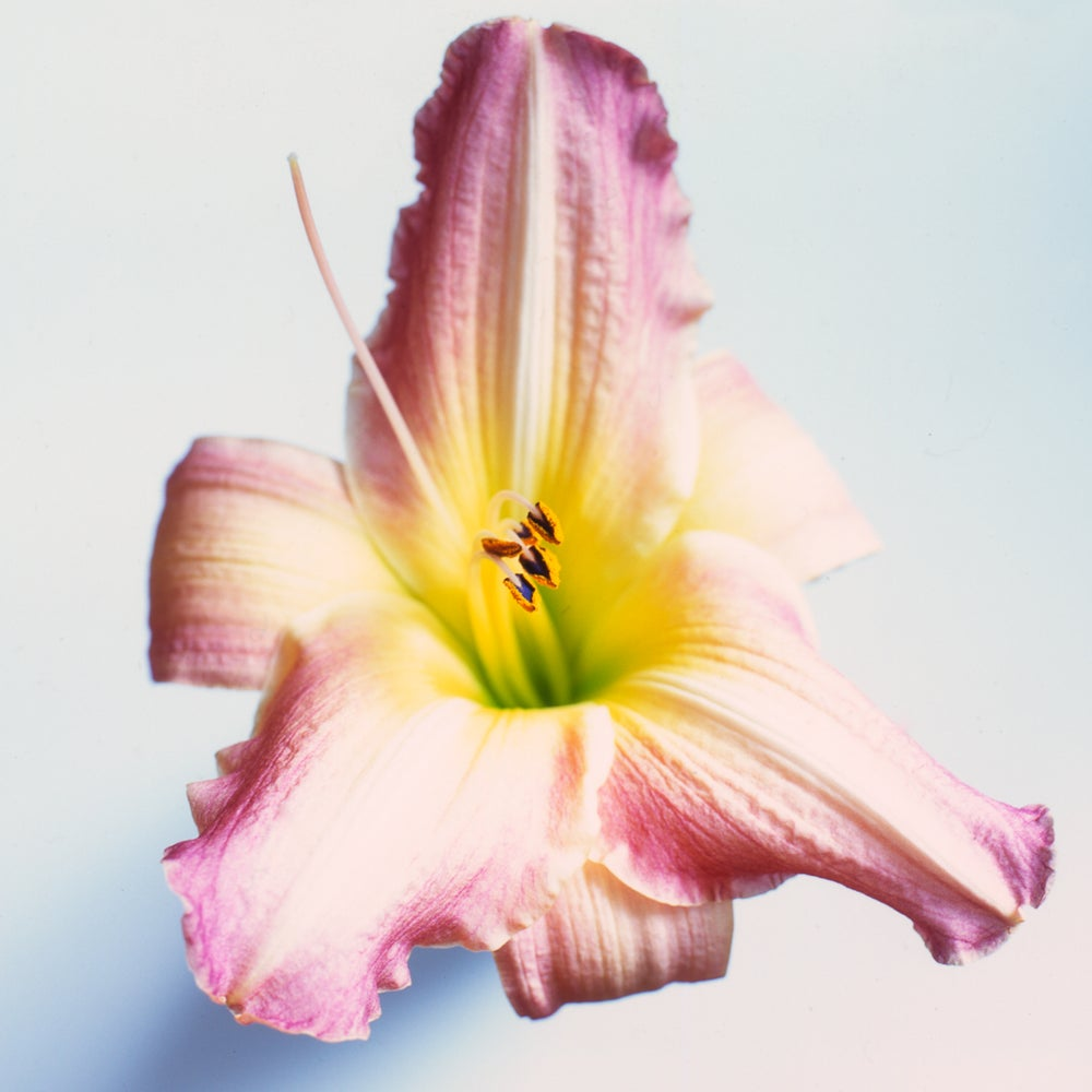 Image of Lily photograph