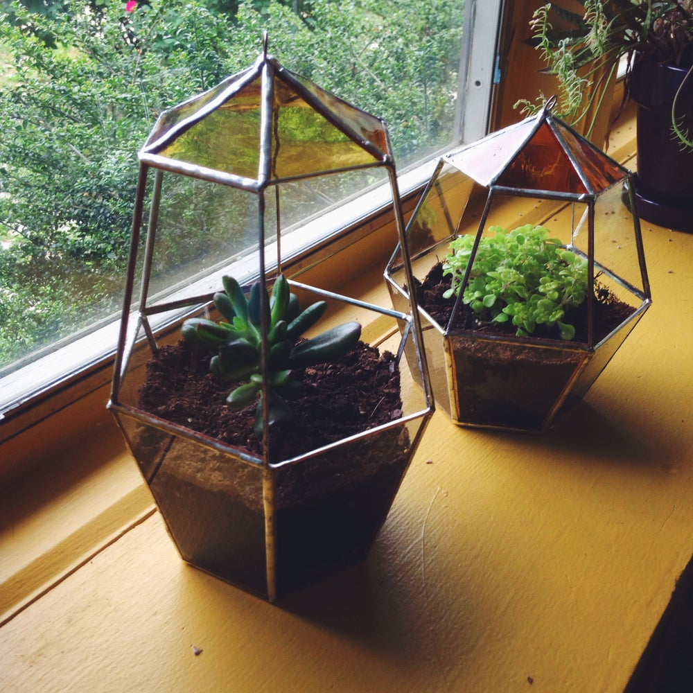 Image of Favus Terrarium - 20% of proceeds go toward invertebrate conservation