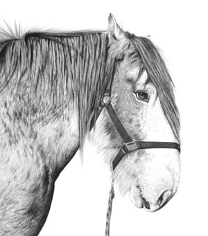 Image of 'KEVIN' Limited Edition Print