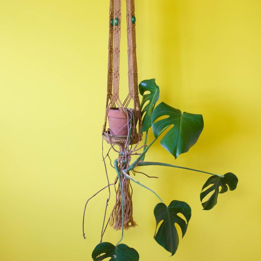 Image of Macrame plant hangers