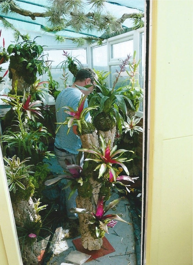 Image of bromeliad trees
