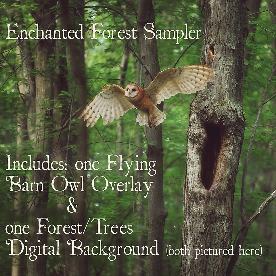 Image of Enchanted Forest Sampler