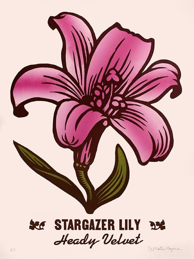 Image of Stargazer Lily