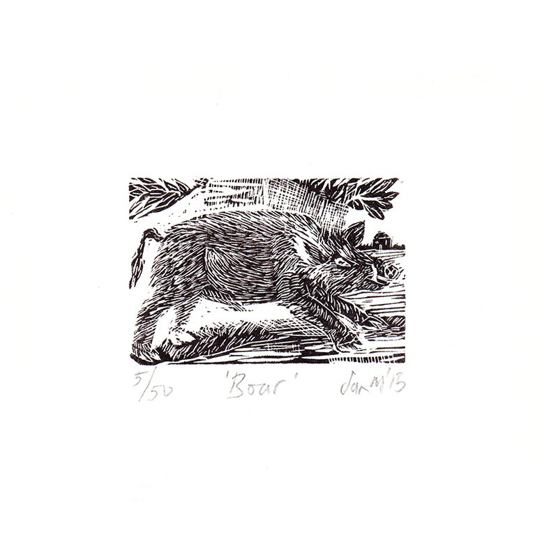 Image of 'Boar' - Wood engraving