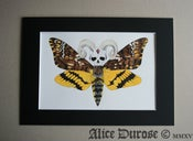 Image of Death's-Head Hawk Moth (The Supreme Overlord) Original Artwork