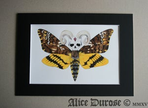 Image of Death's-Head Hawk Moth (The Supreme Overlord) Original Artwork