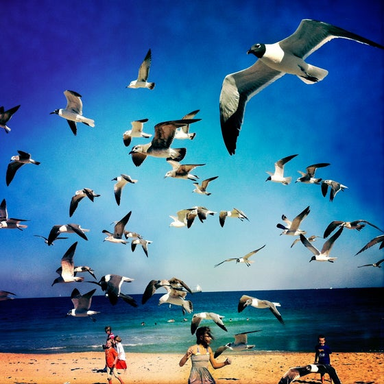 Image of The Birds, Ft Lauderdale FL USA