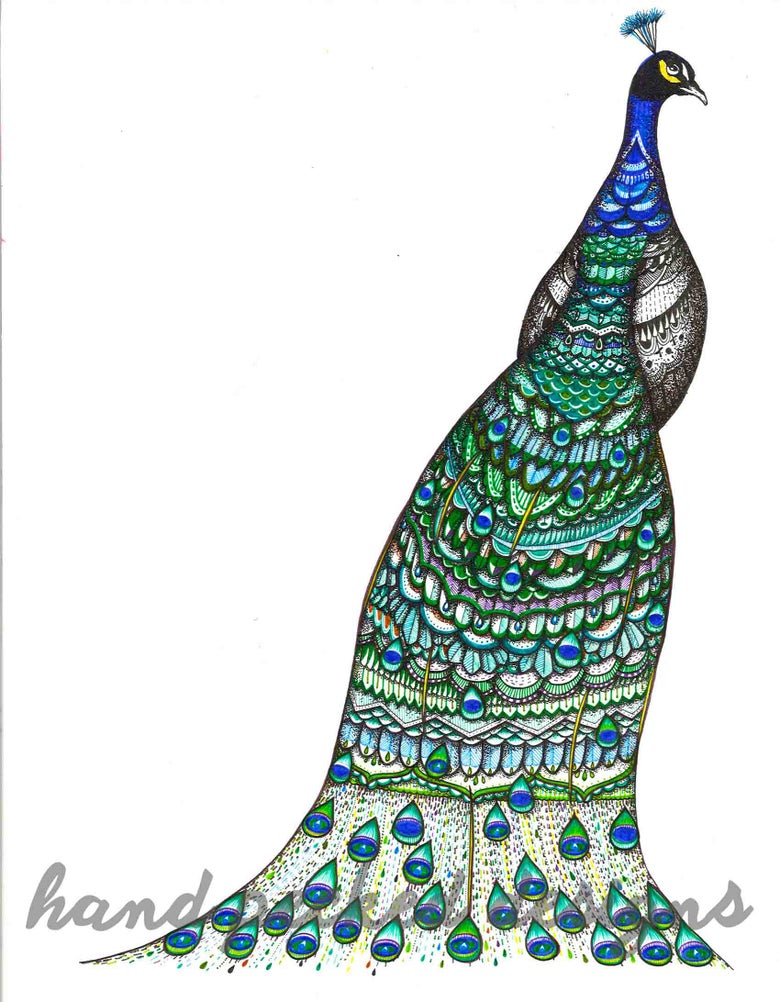 Image of Peacock