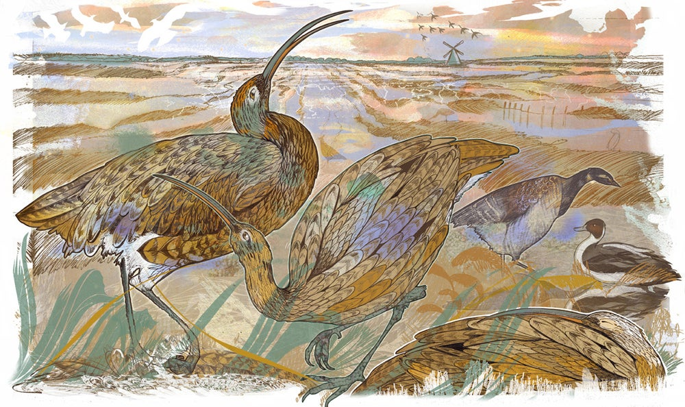 Image of Cley Marshes