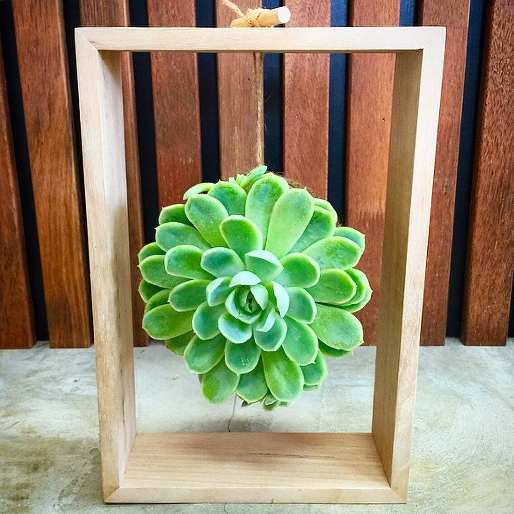 Hanging Succulent in Haus Frame / KOKEDAMA BY CARLA