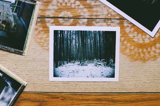 Image of Pines Original Polaroid