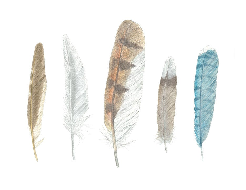 Image of Five Feathers