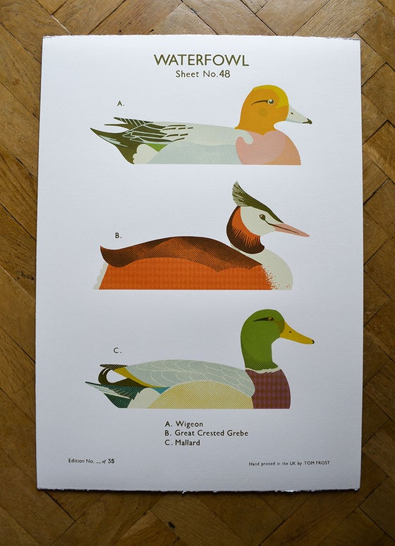 Image of Waterfowl School Chart