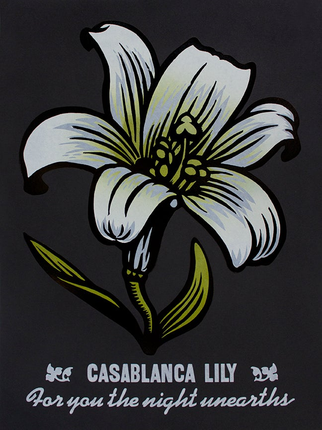 Image of Casablanca Lily