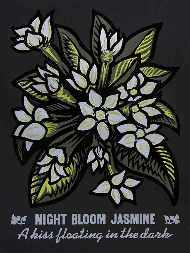 Image of Night Bloom Jasmine
