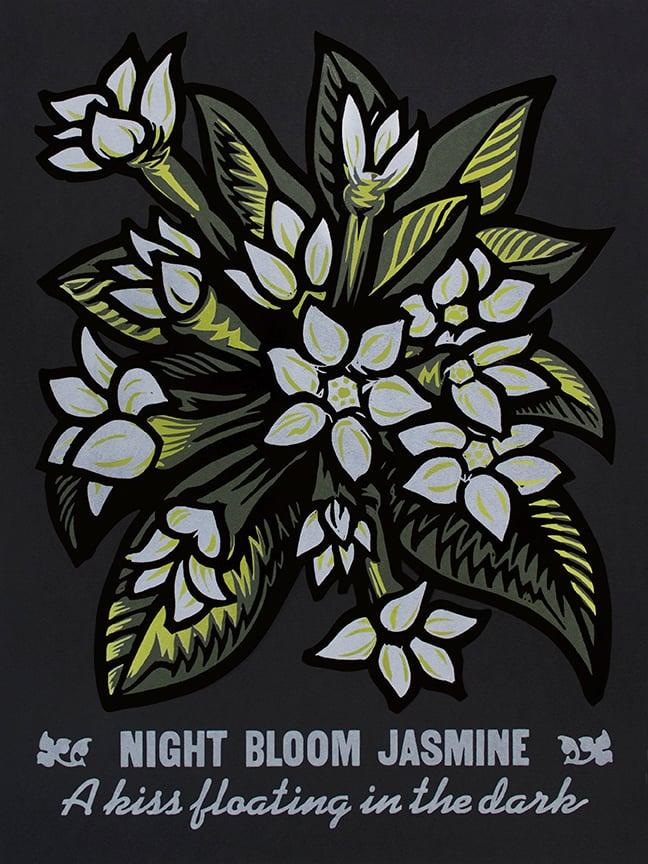 Image of Night Bloom Jasmine