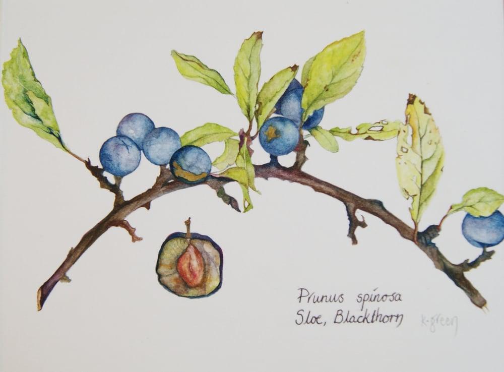 Image of Sloe, Blackthorn - Greeting Card