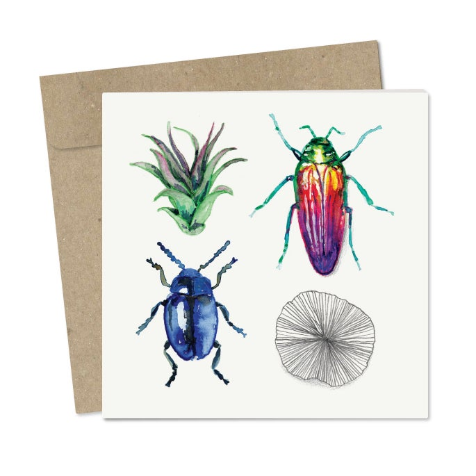 Image of 'Beetles' Card Pack