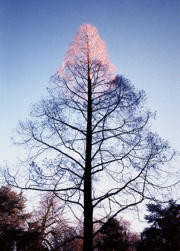 Image of edition 'tree g'