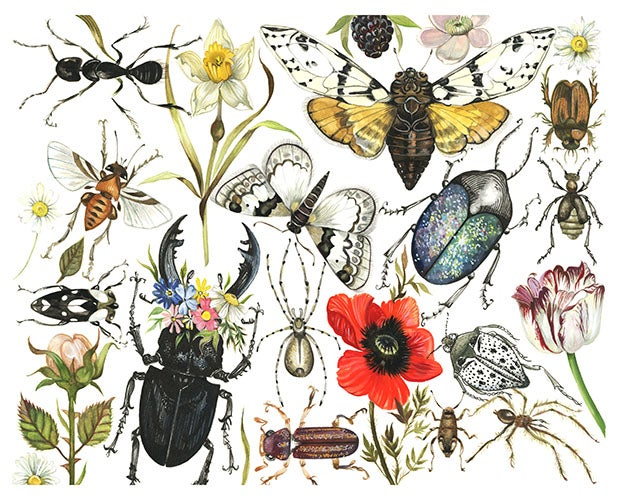 Image of 'Bugs & Flowers'