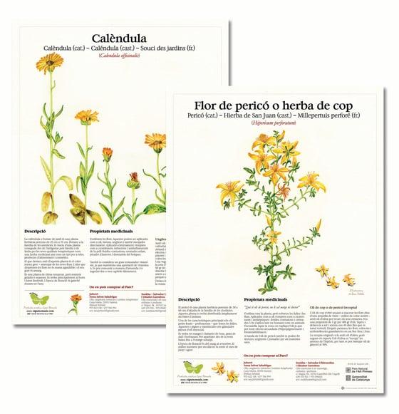 """Image of Cartells sèrie """"Flora del Parc Natural de l'Alt Pirineu"""""""