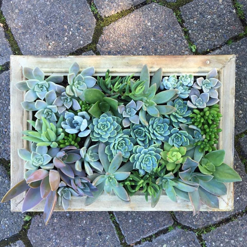 Image of SUCCULENT FRAME