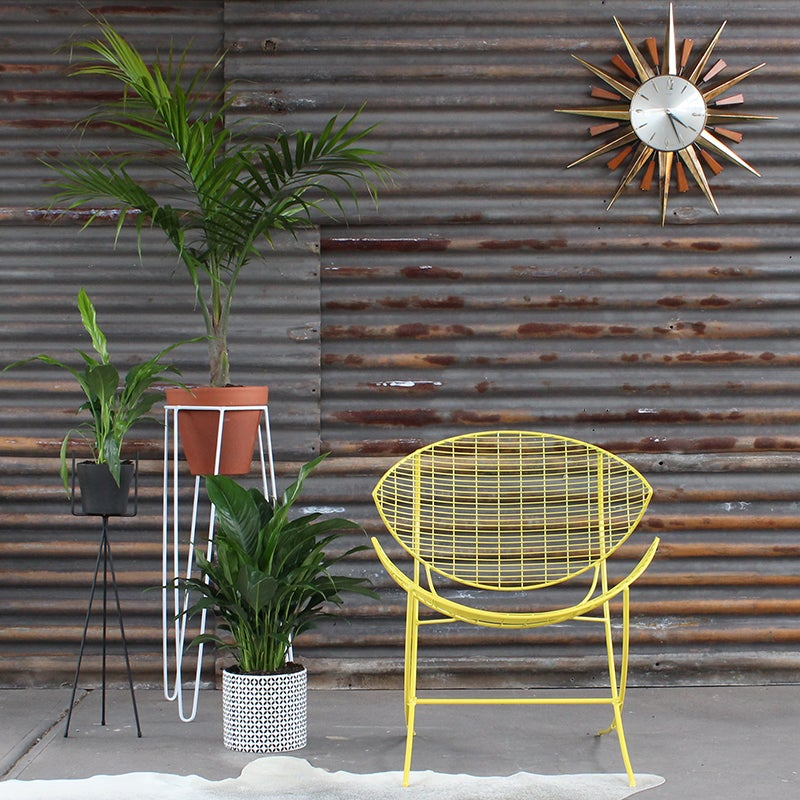 Image of Vintage Outdoor chairs in Lemon Yellow