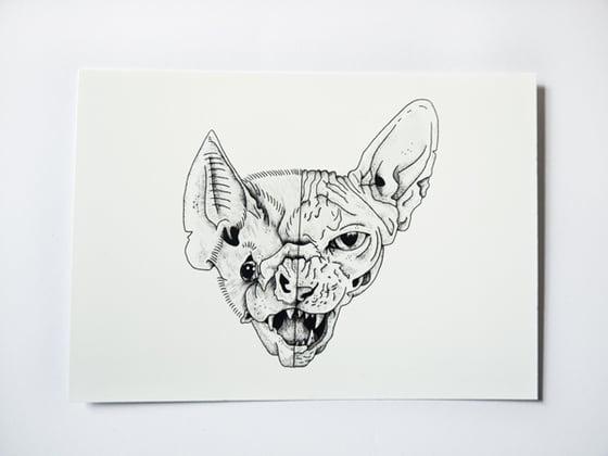 Image of Catbat