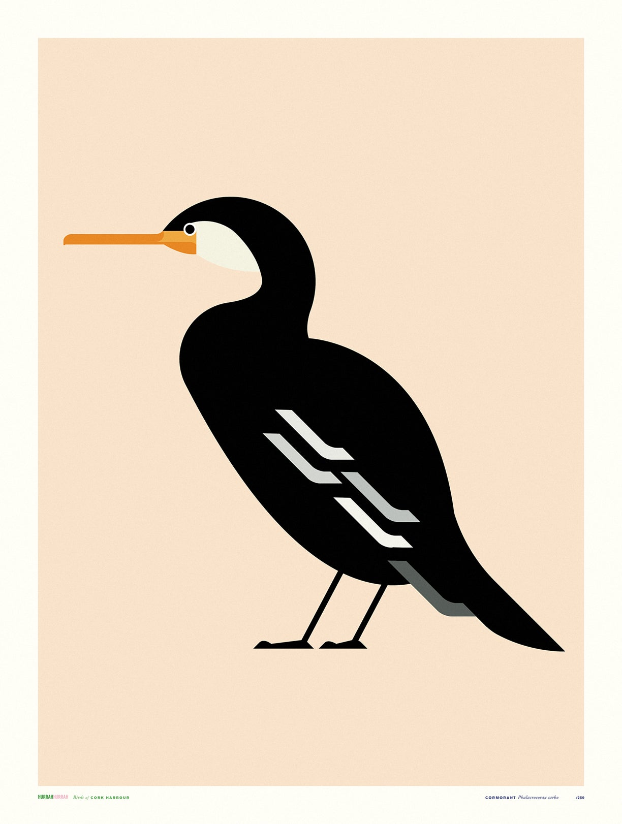 Cormorant / Cork Harbour Bird Series
