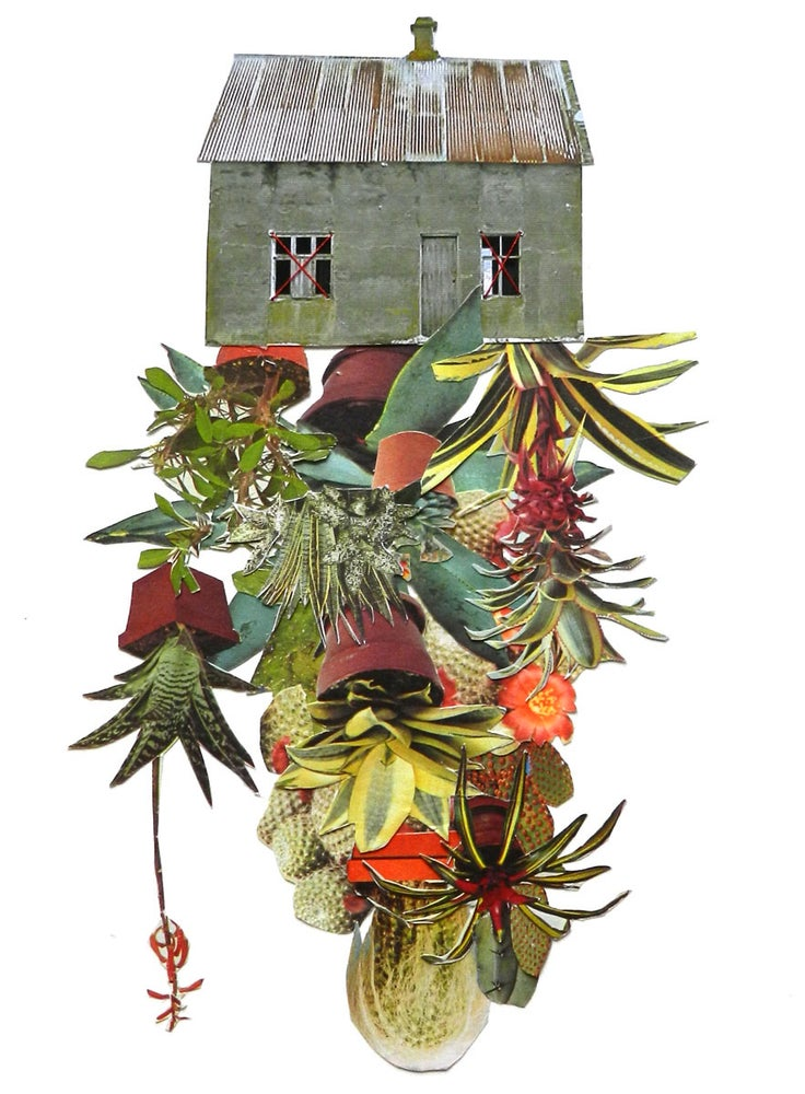 "Image of Print of ""Room cactus"""