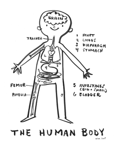Image of NEW! The Human Body