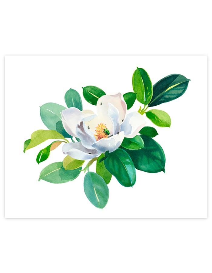 Image of Magnolia Grandiflora Giclée Art Print #1