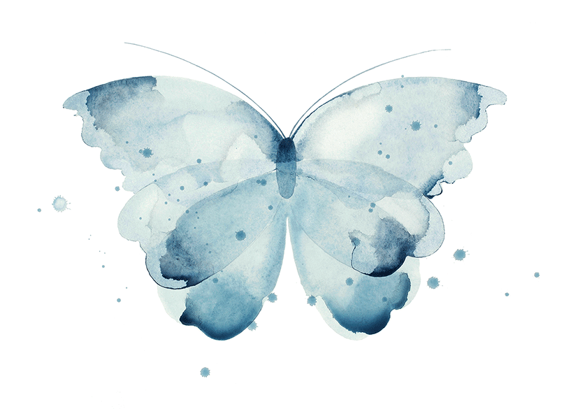 Image of Butterfly turquoise