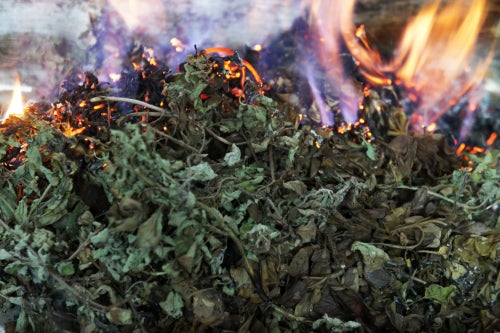 Image of OREGANO spagyric tincture - alchemically enhanced plant extraction