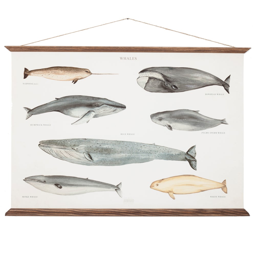 Image of whales poster