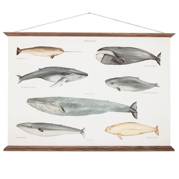 whales poster - arminho