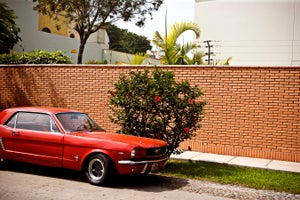 Image of Red Mustang