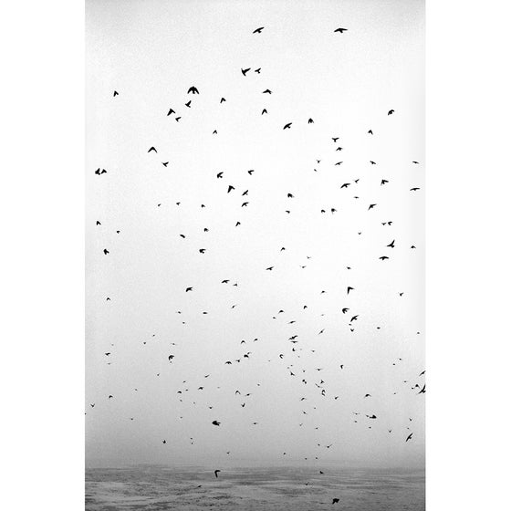 Image of Storm Birds