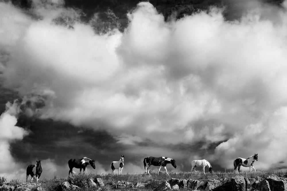 Image of The Wild Ones Edition II (black and white)