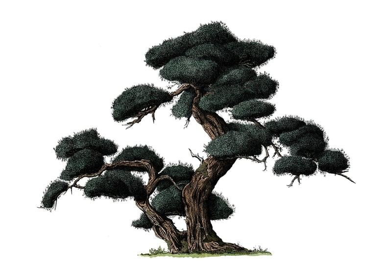 Image of Noh Tree