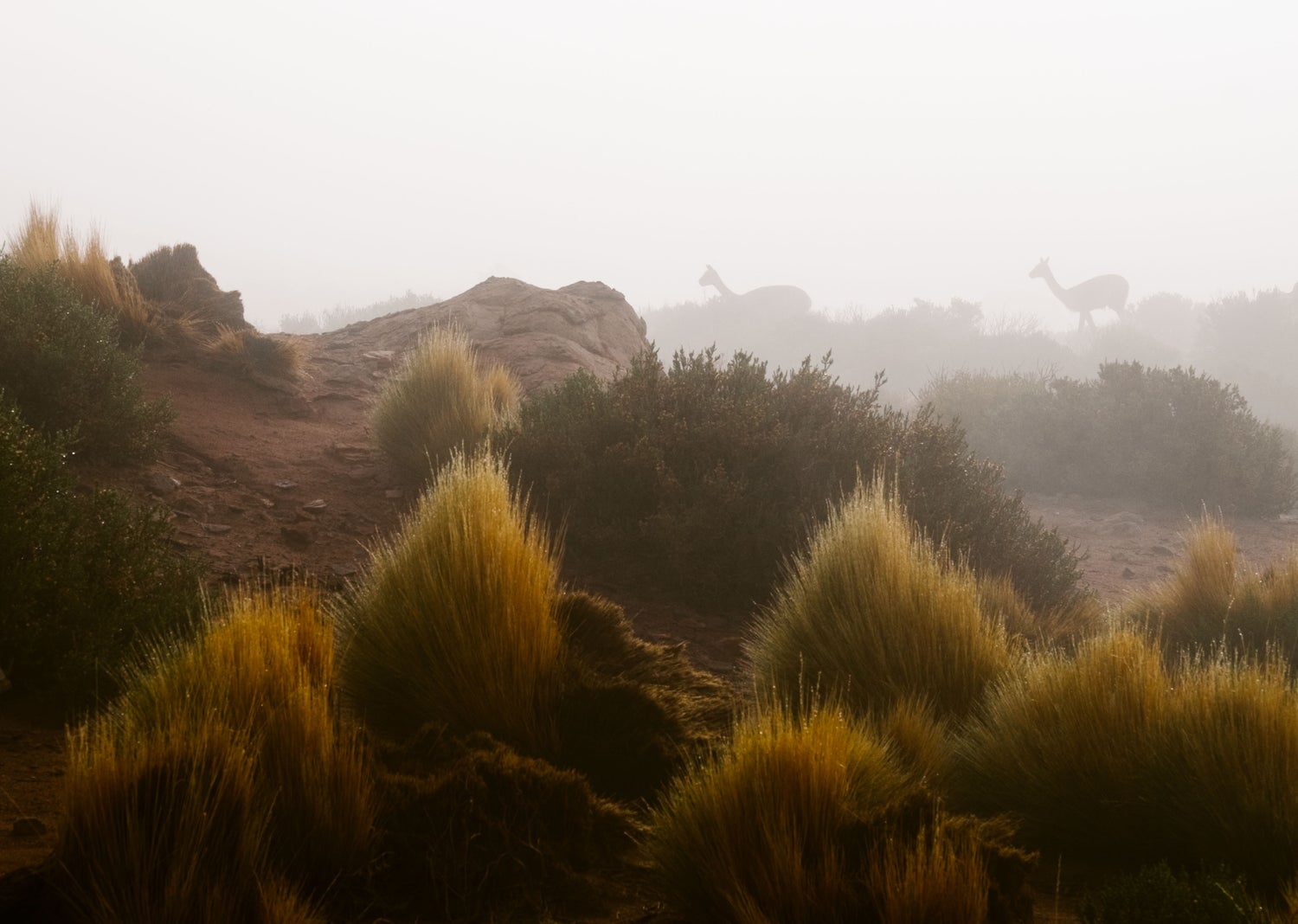 Image of Vicuñas in the Mist