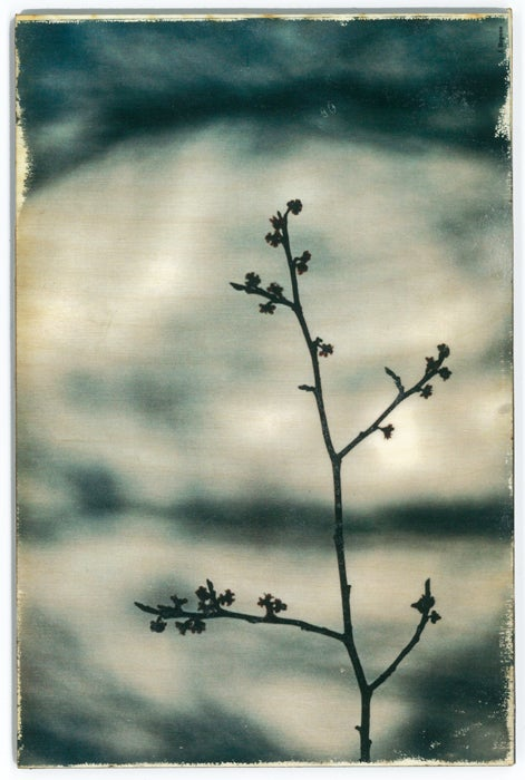 Image of Jess Repose's Slow Photography: Branch