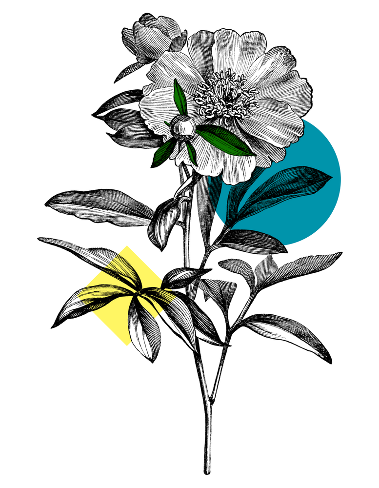 Image of Stay In Time - Flower